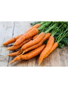 Zanahorias  PRI-016  DESPENSA PERECIBLES
