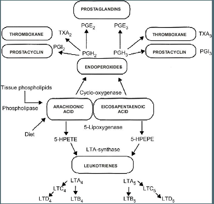 Oxidative-metabolism-of-arachnoid-acid-a